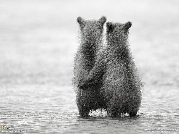 Животные самые милые существа на